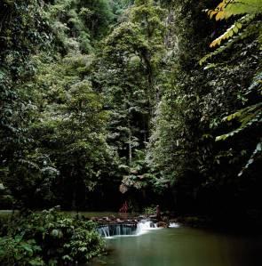 bosque massada